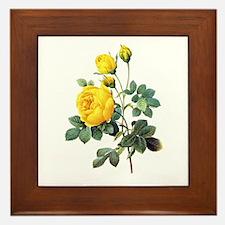 Pierre-Joseph Redoute Rose Framed Tile