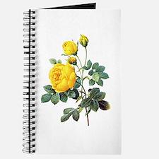 Pierre-Joseph Redoute Rose Journal