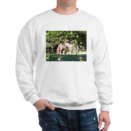 Breton Horse Sweatshirt
