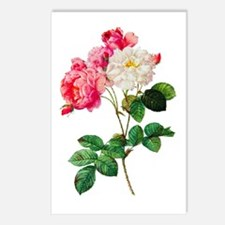 Pierre-Joseph Redoute Rose Postcards (Package of 8