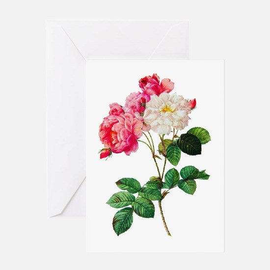 Pierre-Joseph Redoute Rose Greeting Card