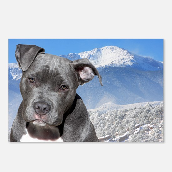 Blue American Pit Bull Terrier Puppy Dog Postcards