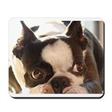 Boston terrier Mouse Pads