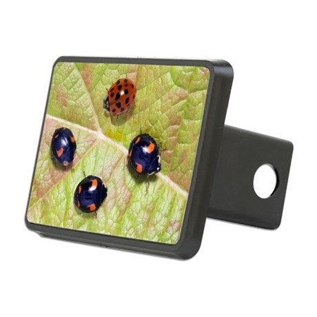 Harlequin ladybirds - Hitch Cover