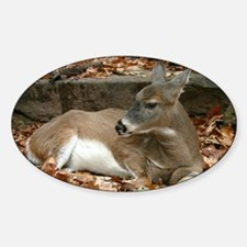 White-tailed Deer Rectangle Decal
