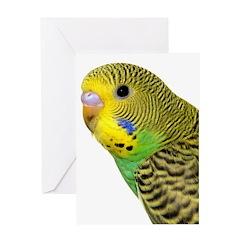 Parakeet 2 Steve Duncan Greeting Card
