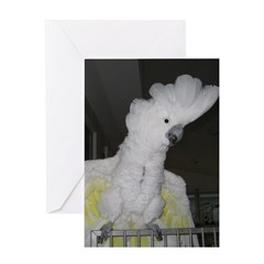 Umbrella Cockatoo - Ruth Greeting Card