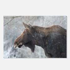 Moose looking over Postcards (Package of 8)