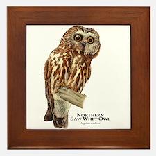 Northern Saw-Whet Owl Framed Tile