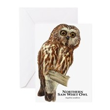 Northern Saw-Whet Owl Greeting Cards (Pk of 10)