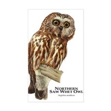Northern Saw-Whet Owl Decal