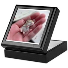 Adorable Sleeping Baby Hamster Keepsake Box