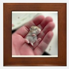 Adorable Sleeping Baby Hamster Framed Tile