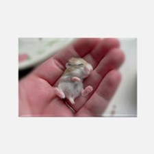 Adorable Sleeping Baby Hamster Rectangle Magnet