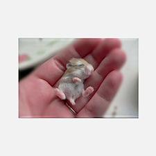 Adorable Sleeping Baby Hamster Rectangle Magnet