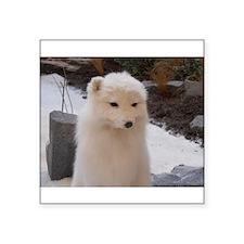"Arctic Fox Square Sticker 3"" x 3"""