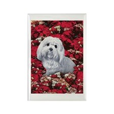 Maltese Poinsettia Christmas Holiday Rectangle Mag
