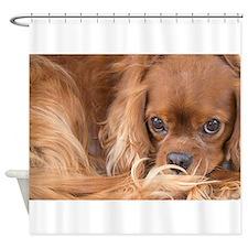 Sweet Friend King Charles Spaniel Shower Curtain