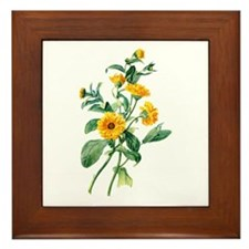 Marigold Drawn From Nature Framed Tile