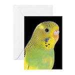 Parakeet 1 Steve Duncan Greeting Cards (Pk of 10)