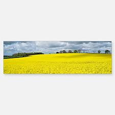 Oilseed Rape (Brassica napus) - Bumper Bumper Sticker