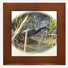 Green Heron Stalking Frogs Framed Tile