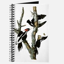 Ivory Billed Woodpeckers Journal