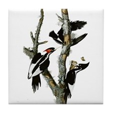 Ivory Billed Woodpeckers Tile Coaster