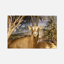 Antelope & Lion Rectangle Magnet