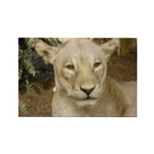 Female African Lion Rectangle Magnet