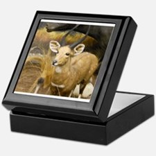 Gazelle Keepsake Box