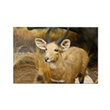 Gazelle Magnets