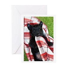 Scottish Terrier Puppy Play Greeting Card