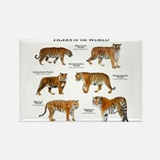 Tigers of the World Rectangle Magnet