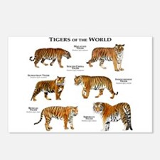 Tigers of the World Postcards (Package of 8)