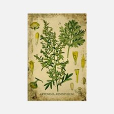 Absinthe Botanical Illustration Rectangle Magnet