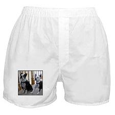BostonTerrier dogs Boxer Shorts