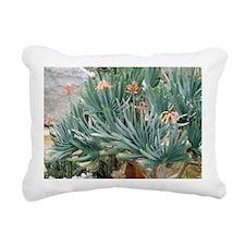 Fan aloe (Aloe plicatilis) - Pillow