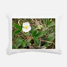 Musk strawberry (Fragaria moschata) - Pillow
