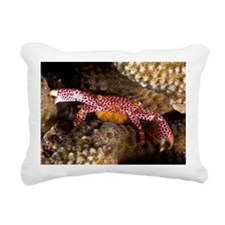 Porcelain crab with eggs - Pillow