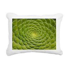 Aeonium tabulifrome - Pillow