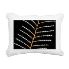 Hydrozoa colony - Pillow