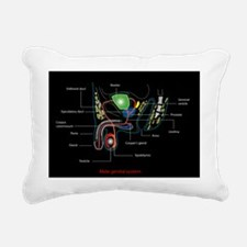 Male genitourinary system, artwork - Pillow
