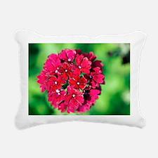 Verbena 'Claret' - Pillow