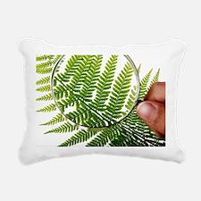 Fern frond morphology - Pillow