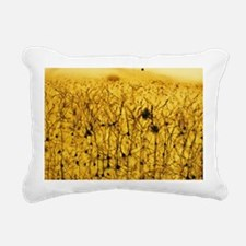 Cerebral cortex nerve cells - Pillow