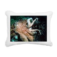 Broadclub cuttlefish - Pillow