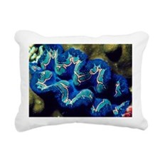Giant clam - Pillow