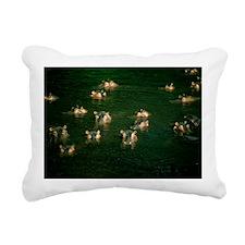 Hippopotamuses in water - Pillow