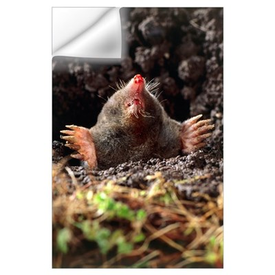European mole Wall Decal